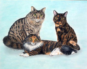 3 Cats - Tiger, Calico and Tortoise