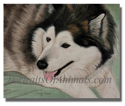 alaskan malamute dog portrait painting