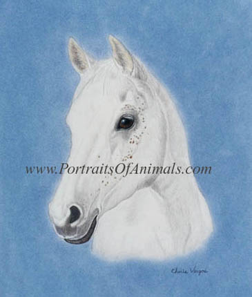 Arabian Horse Painting Portrait