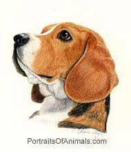 Beagle Dog portrait - Pet Portraits by Cherie