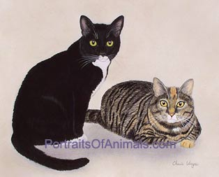 Calico and Tuxedo Cat Portrait - Pet Portraits by Cherie