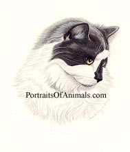Cat Pet Portrait - Pet Portraits by Cherie