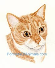 Orange Tiger Cat Portrait
