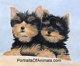 Yorkshire Terriers (Yorkie) Dog Portrait - Pet Portraits by Cherie