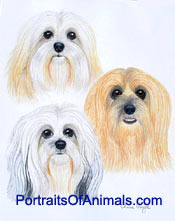 3 Lhasa Apso Dogs Portrait - Pet Portraits by Cherie