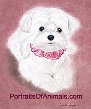 Maltese Puppy Dog Portrait - Pet Portraits by Cherie