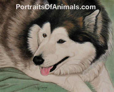 Alaskan Malamute Dog Portrait- Pet Portraits by Cherie Vergos