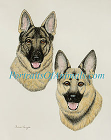 German Shepherd Painting Portrait Dog Art