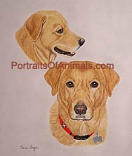 Yellow Lab Portrait - Pet Portraits by Cherie