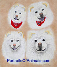 Chow Chow Dog Portrait - Pet Portraits by Cherie