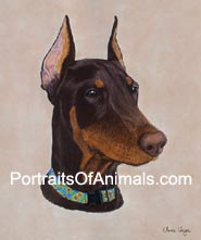 Red Doberman Portrait- Pet Portraits by Cherie