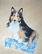 Sheltie Portrait- Pet Portraits by Cherie Vergos