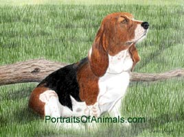 Basset Hound Dog Portrait - Pet Portraits by Cherie
