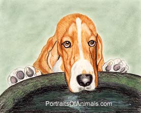 Bassett Hound Drinking from Birdbath Portrait - Pet Portraits by Cherie