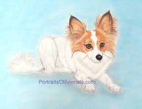 Papillon Dog Portrait - Pet Portraits by Cherie