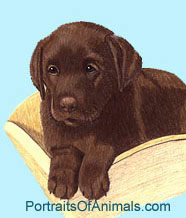 Chocolate Lab Puppy Portrait - Pet Portraits by Cherie Vergos