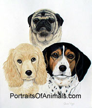 Pug, Cocker Spaniel and Beagle Dog Portrait