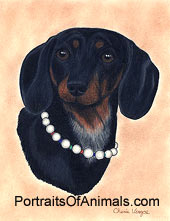 Dachshund Dog Portrait - Pet Portraits by Cherie