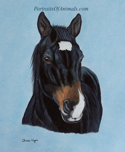 Quarter Horse Portrait