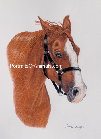 Quarter Horse Portrait- Pet Portraits by Cherie