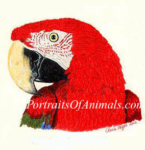 Greenwing Macaw Parrot Portrait