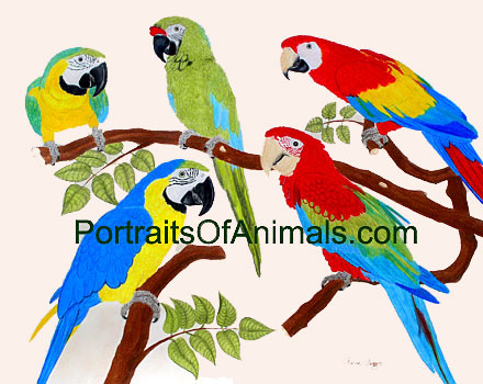 Harlequin Macaw, Military Macaw, Scarlet Macaw, Blue and Gold Macaw and Greenwing Macaw Portrait