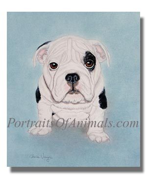 English bulldog Dog Painting Portrait