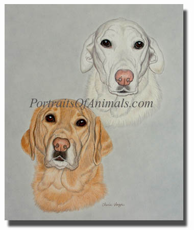 two yellow labs dog portrait painting